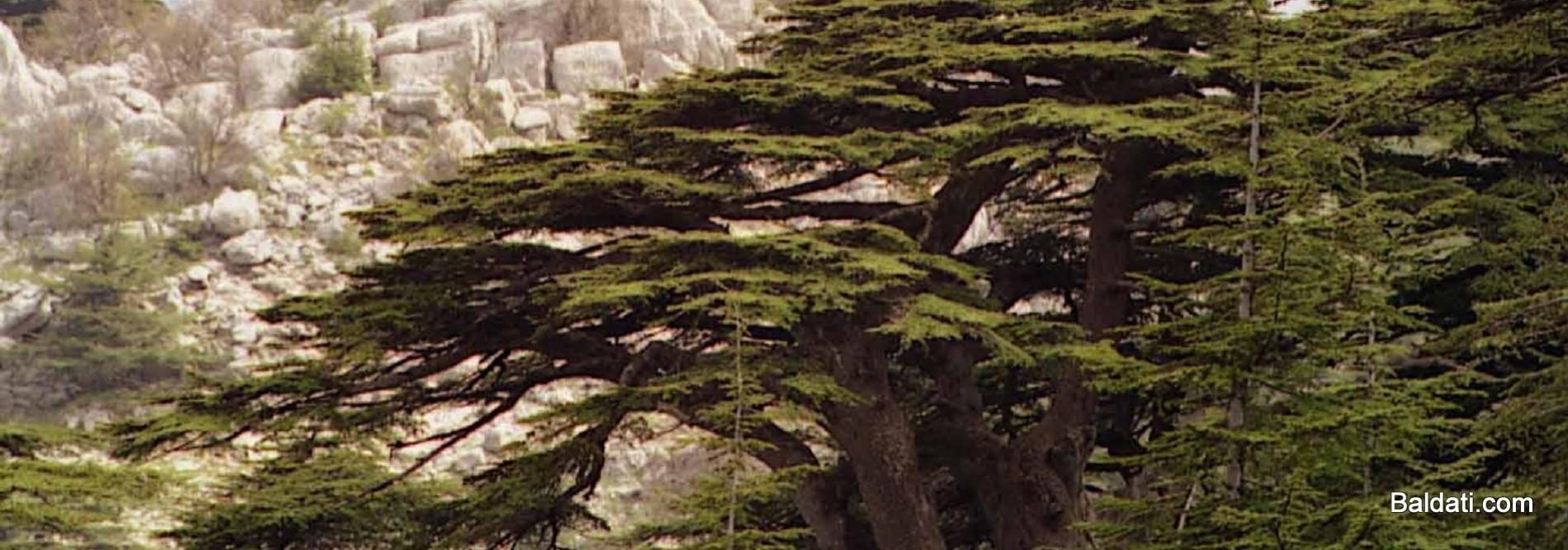 1dbe081e0 Baldati-Lebanon